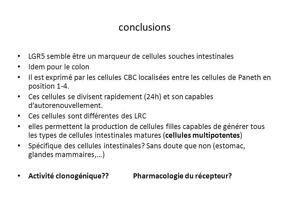 conclusions LGR5 semble être un marqueur de cellules souches intestinales. Idem pour le colon.