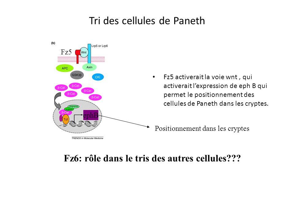 Tri des cellules de Paneth