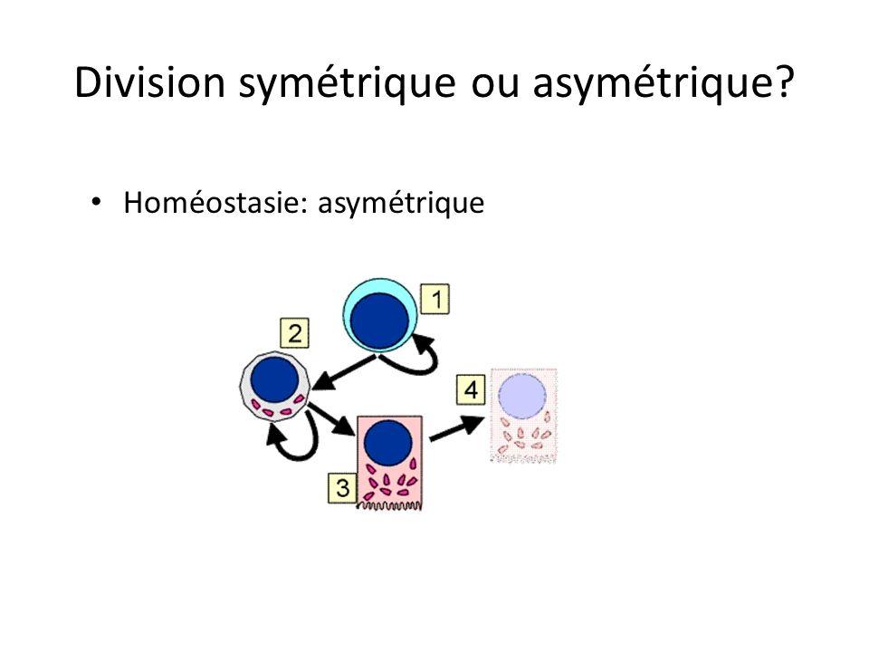 Division symétrique ou asymétrique