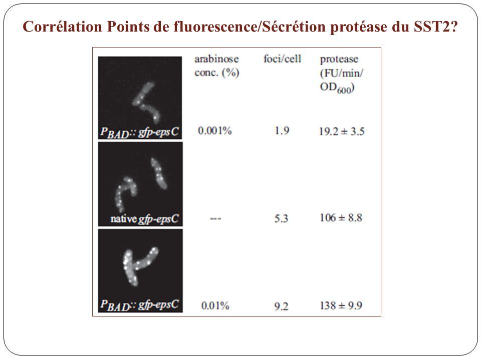 Corrélation Points de fluorescence/Sécrétion protéase du SST2