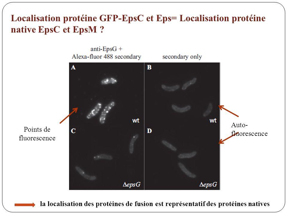Points de fluorescence