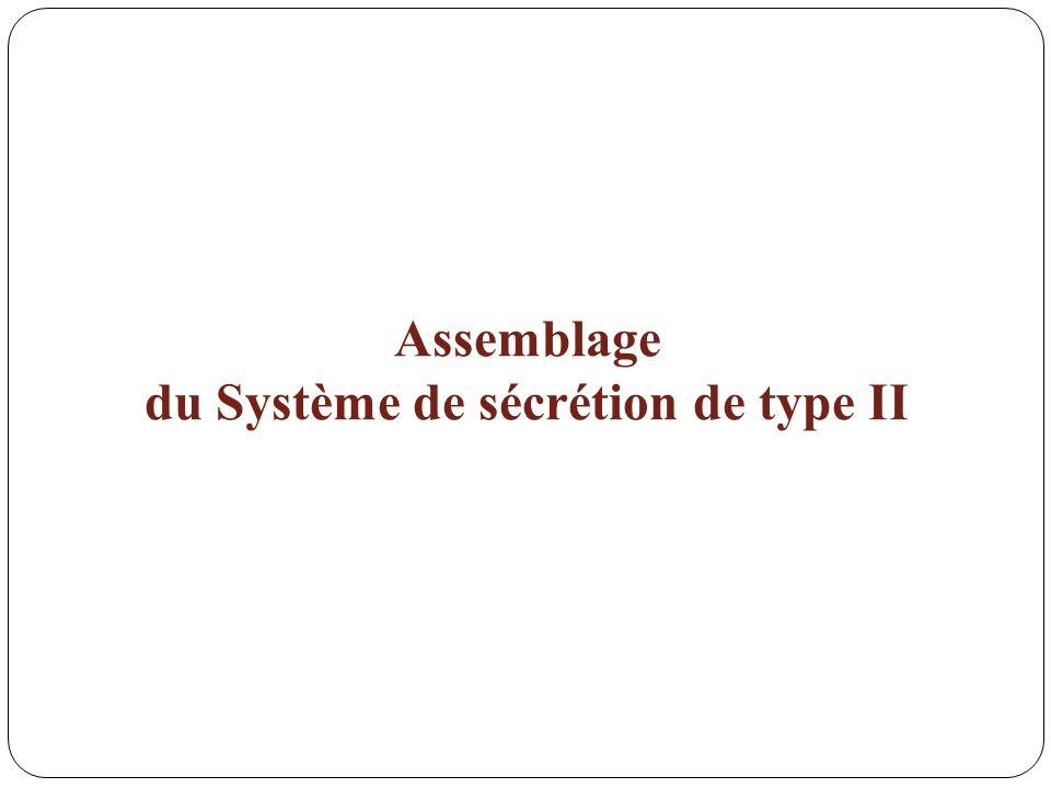 du Système de sécrétion de type II