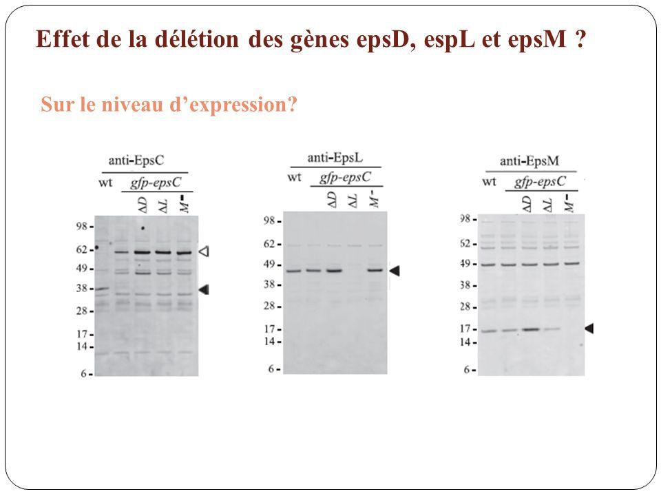 Effet de la délétion des gènes epsD, espL et epsM