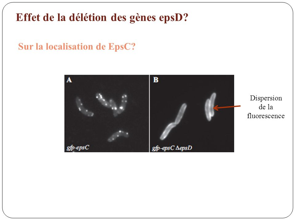 Dispersion de la fluorescence