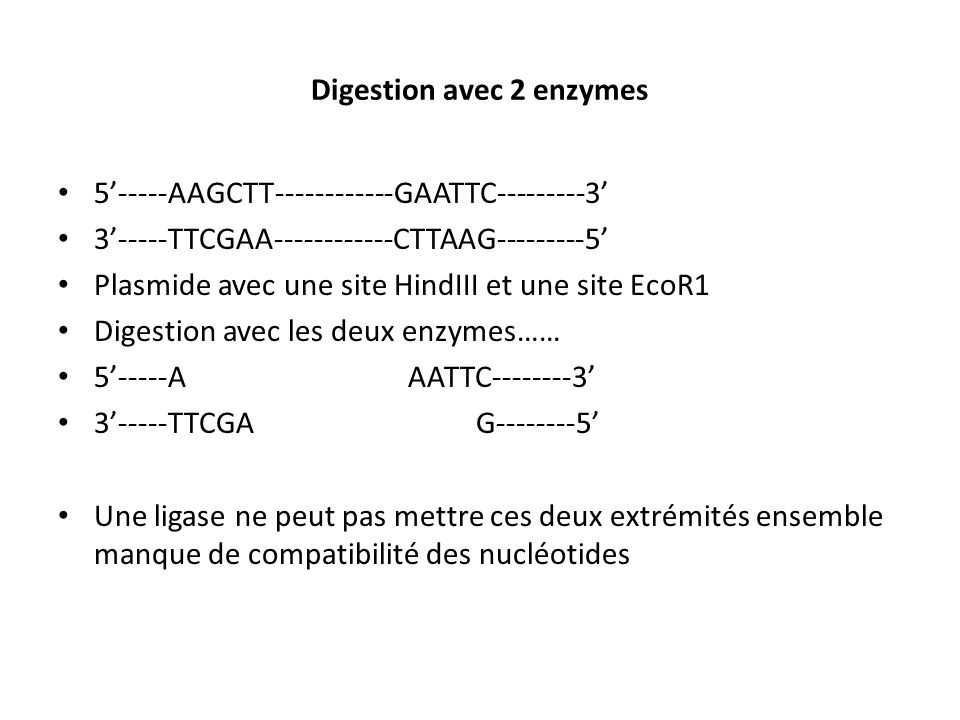 Digestion avec 2 enzymes