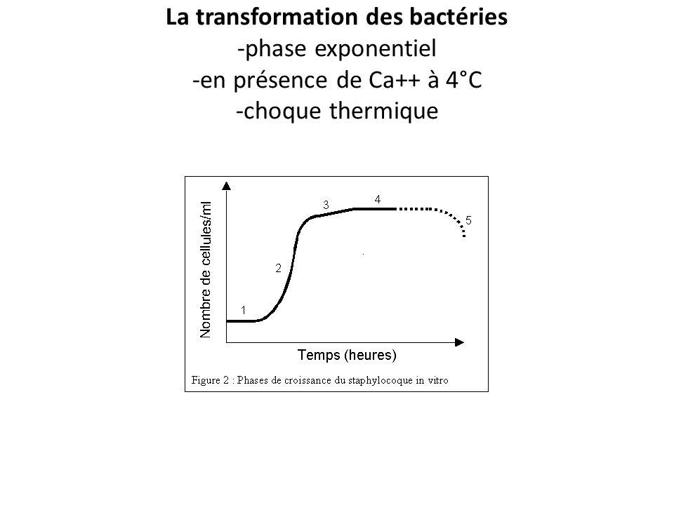 La transformation des bactéries -phase exponentiel -en présence de Ca++ à 4°C -choque thermique