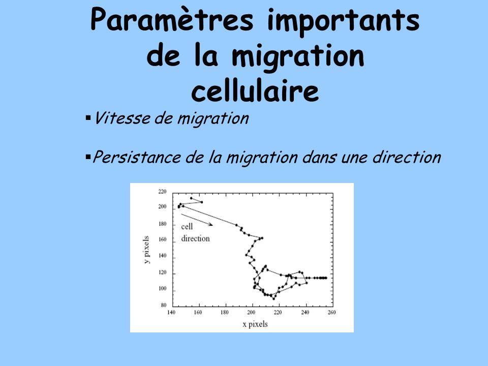 Paramètres importants de la migration cellulaire