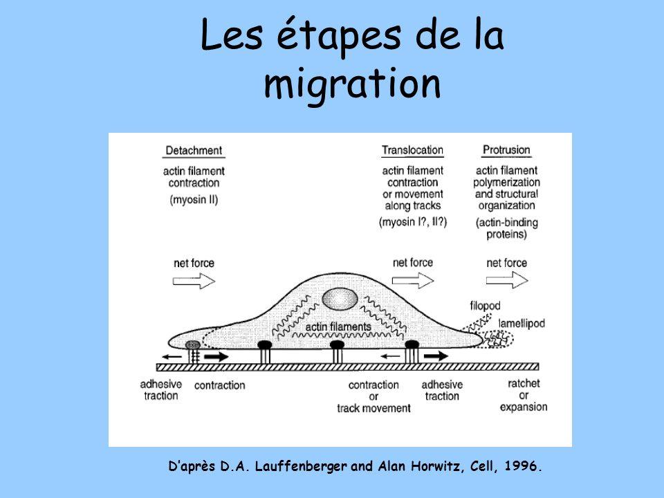 Les étapes de la migration