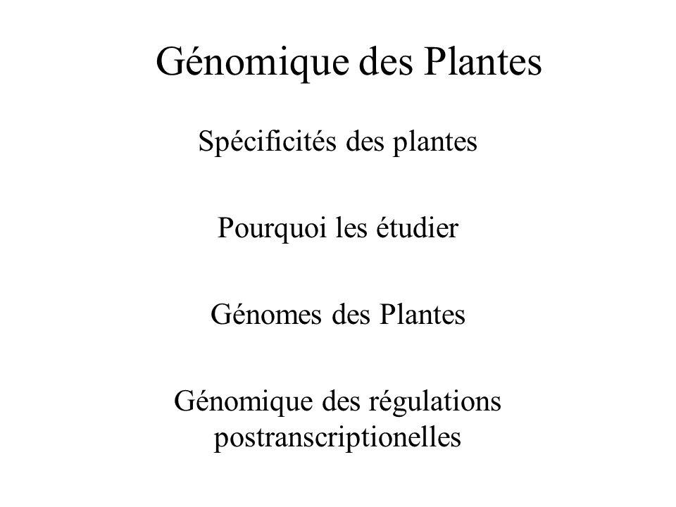 Génomique des Plantes Spécificités des plantes Pourquoi les étudier