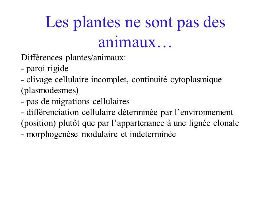 Les plantes ne sont pas des animaux…