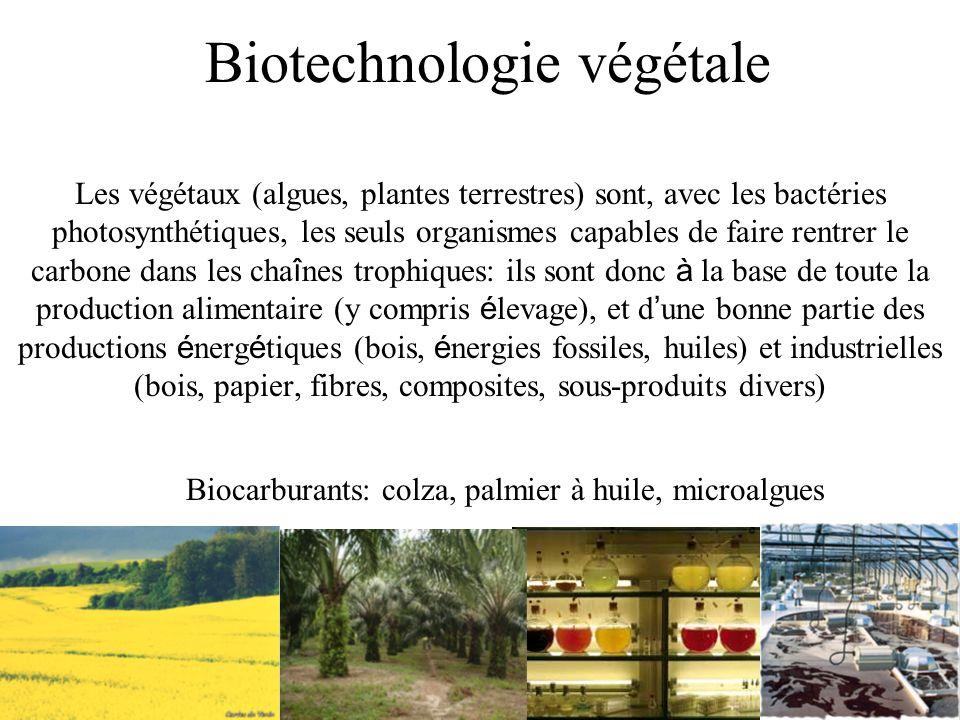 Biotechnologie végétale