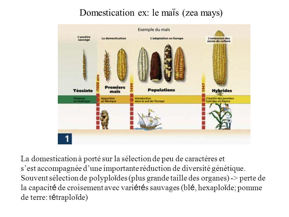 Domestication ex: le maïs (zea mays)