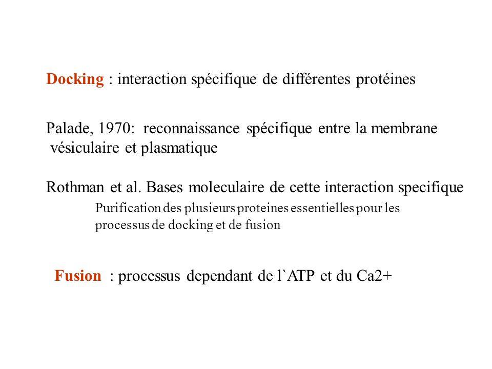 Docking : interaction spécifique de différentes protéines