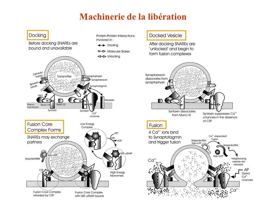 Machinerie de la libération