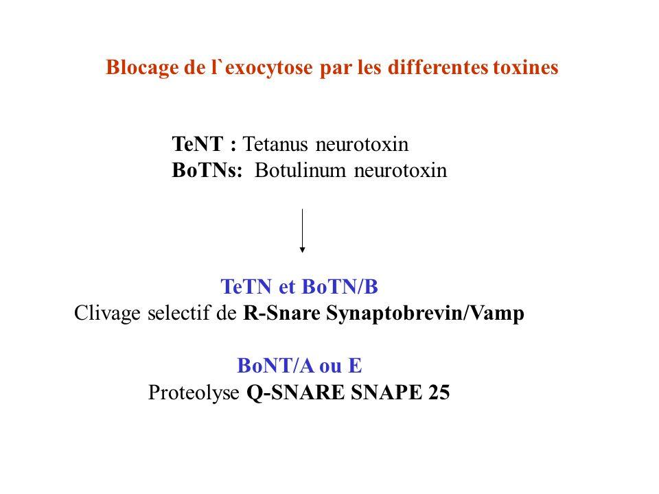 TeTN et BoTN/B BoNT/A ou E