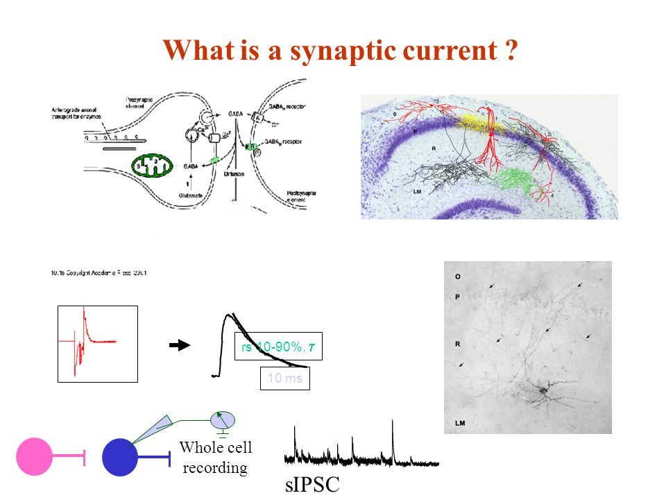 What is a synaptic current