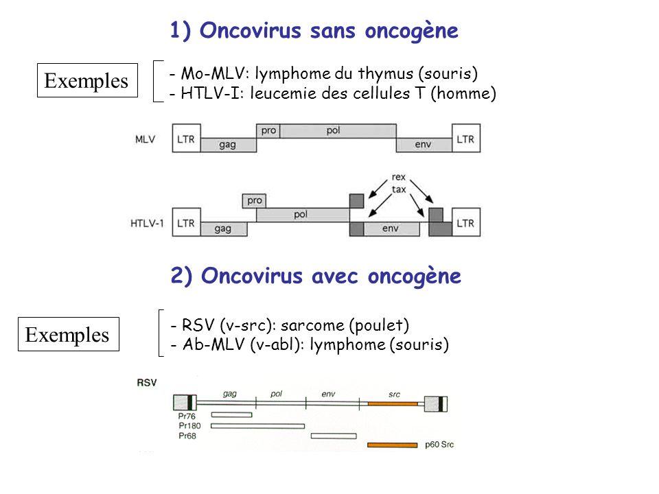 1) Oncovirus sans oncogène