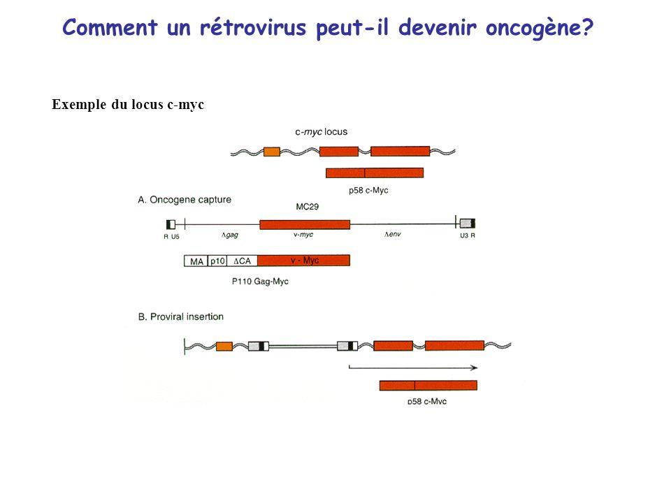 Comment un rétrovirus peut-il devenir oncogène