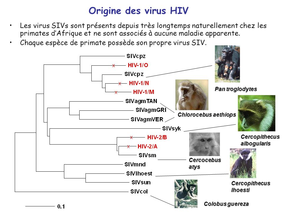 Origine des virus HIV