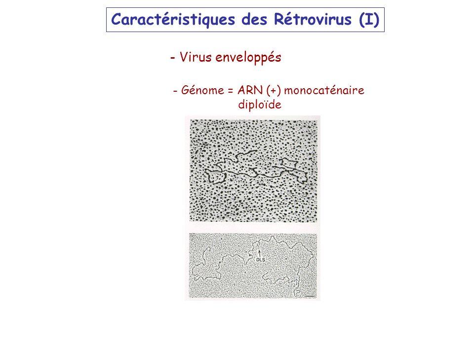 Caractéristiques des Rétrovirus (I)