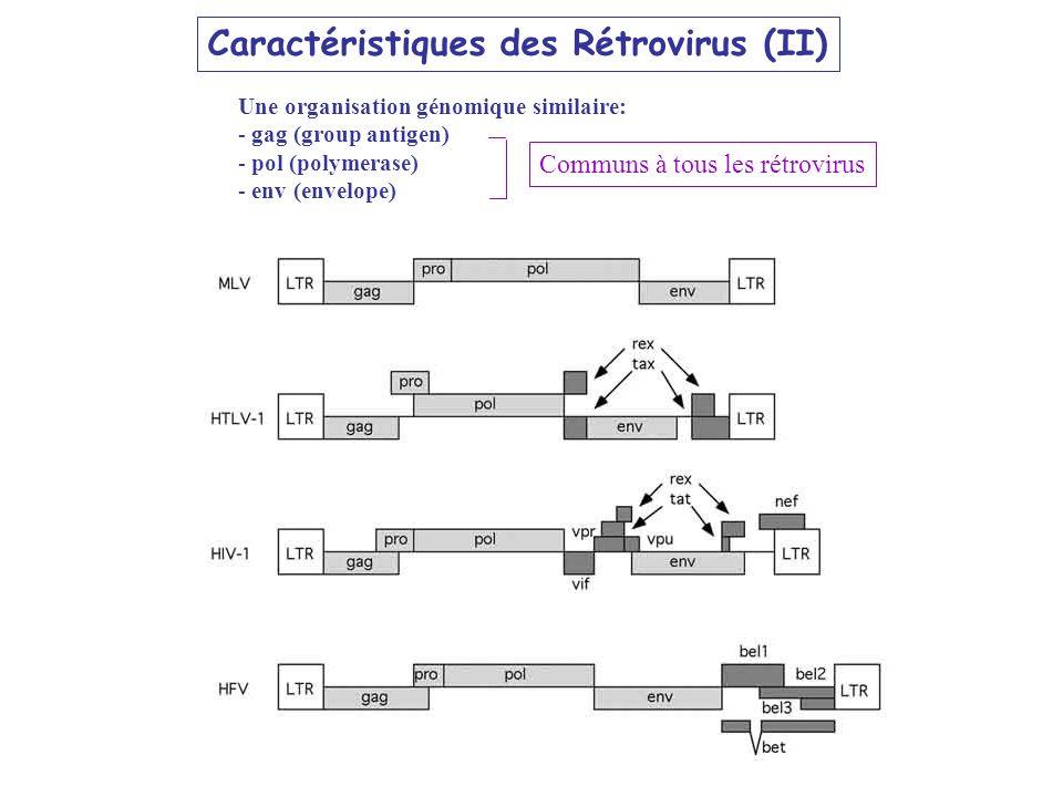 Caractéristiques des Rétrovirus (II)