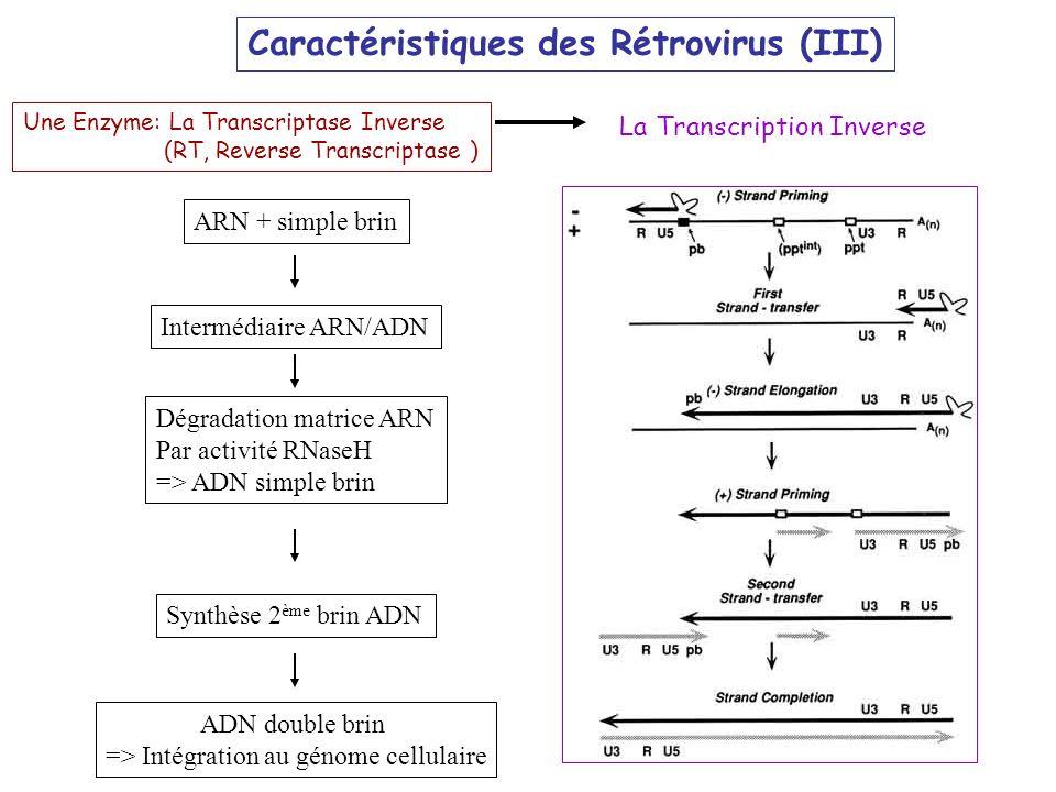 => Intégration au génome cellulaire