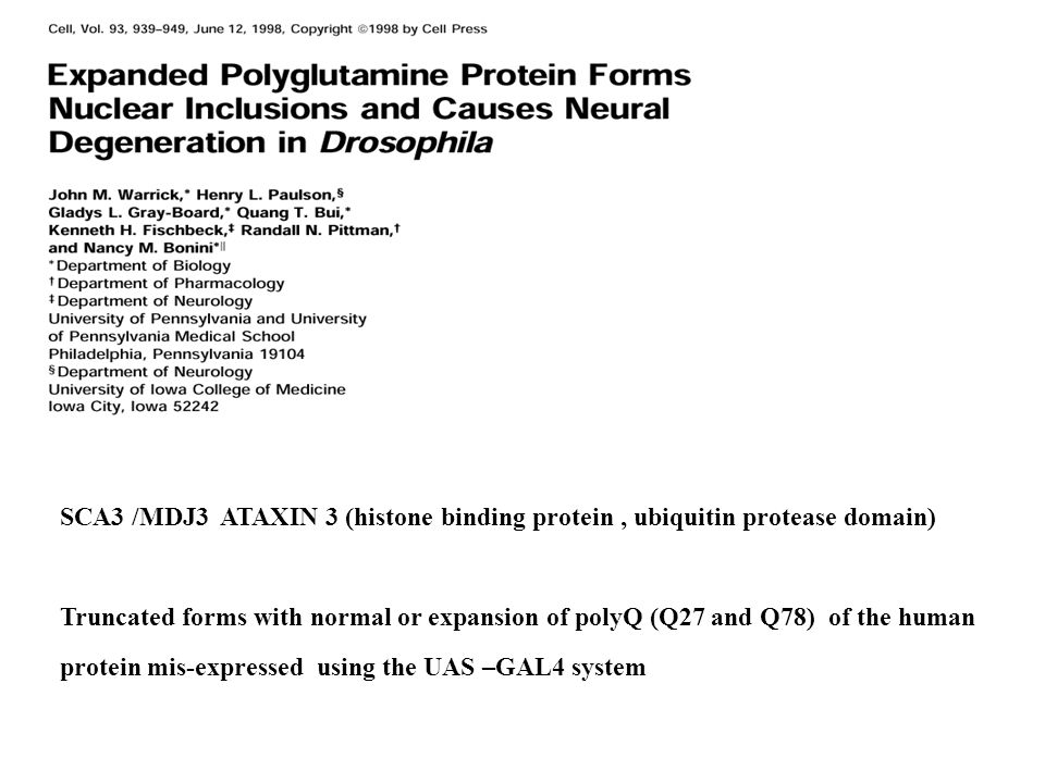 SCA3 /MDJ3 ATAXIN 3 (histone binding protein , ubiquitin protease domain)