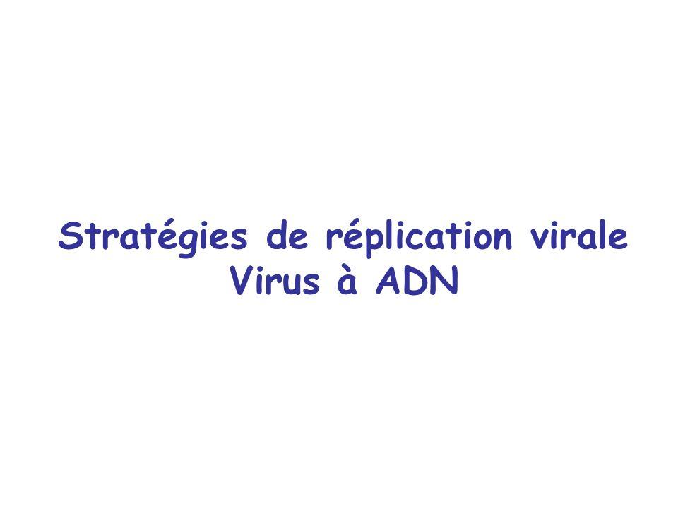 Stratégies de réplication virale