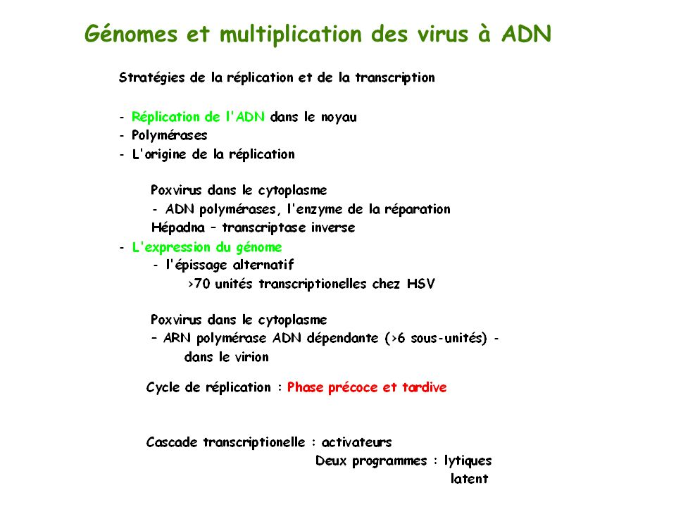 Génomes et multiplication des virus à ADN