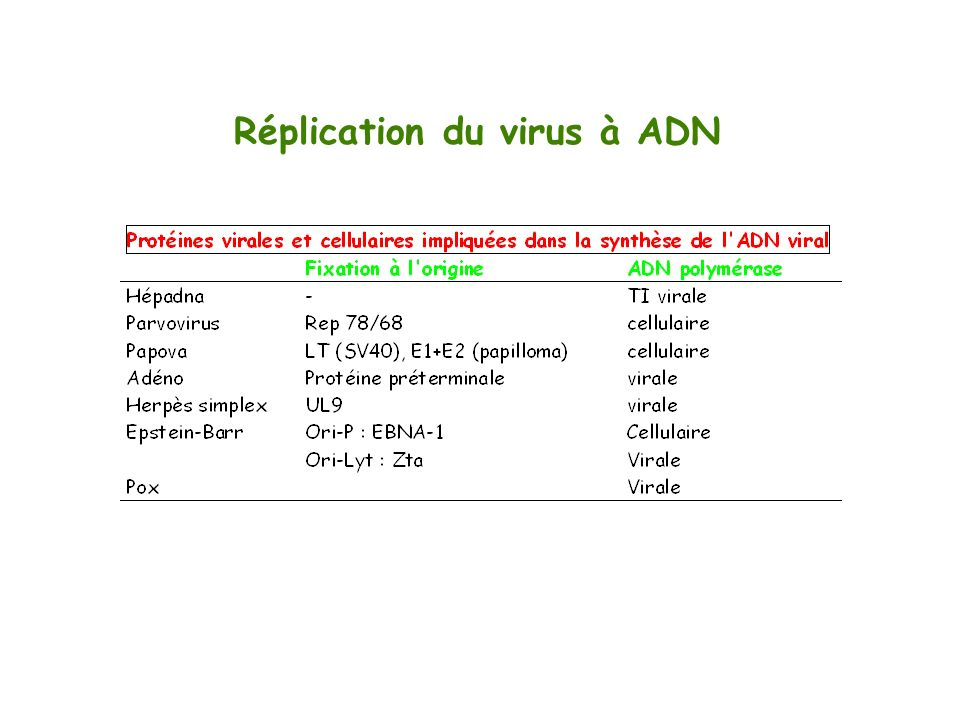 Réplication du virus à ADN