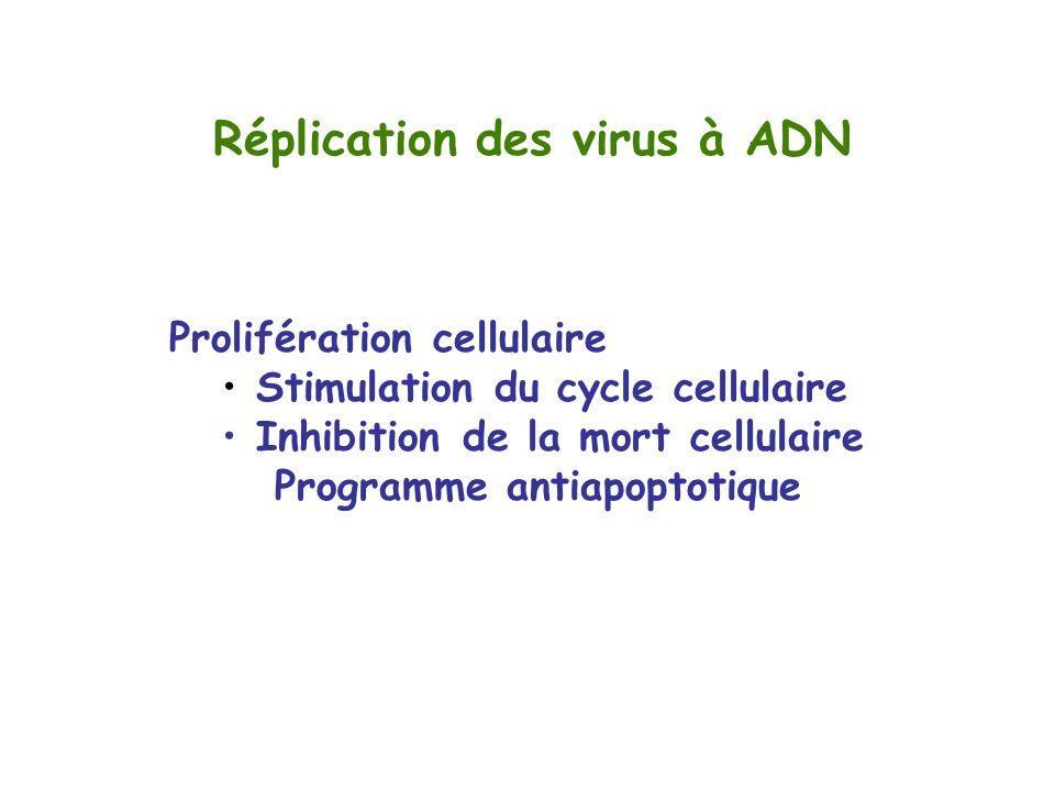 Réplication des virus à ADN