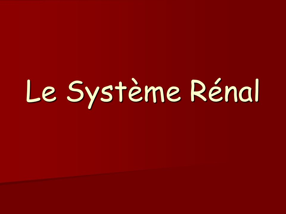 Le Système Rénal