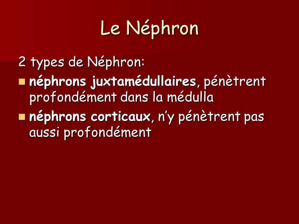 Le Néphron 2 types de Néphron: