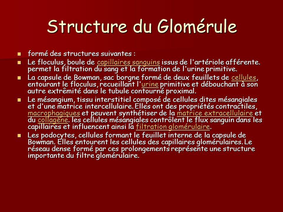 Structure du Glomérule