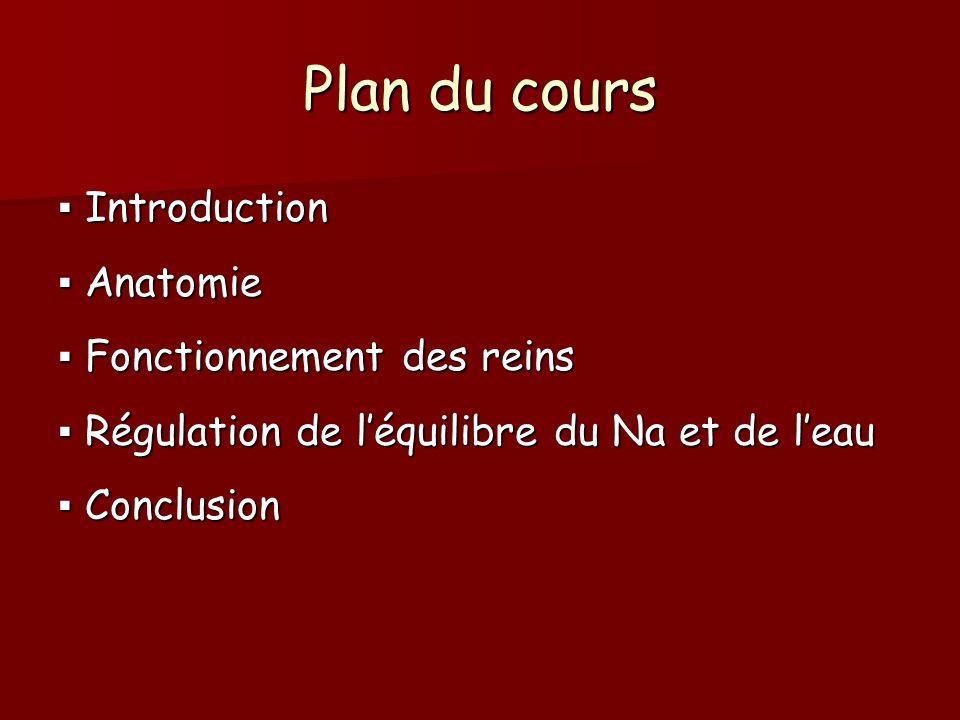 Plan du cours ▪ Introduction ▪ Anatomie ▪ Fonctionnement des reins