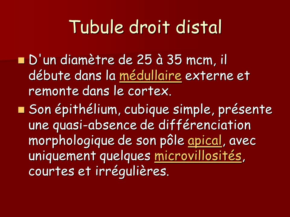 Tubule droit distal D un diamètre de 25 à 35 mcm, il débute dans la médullaire externe et remonte dans le cortex.
