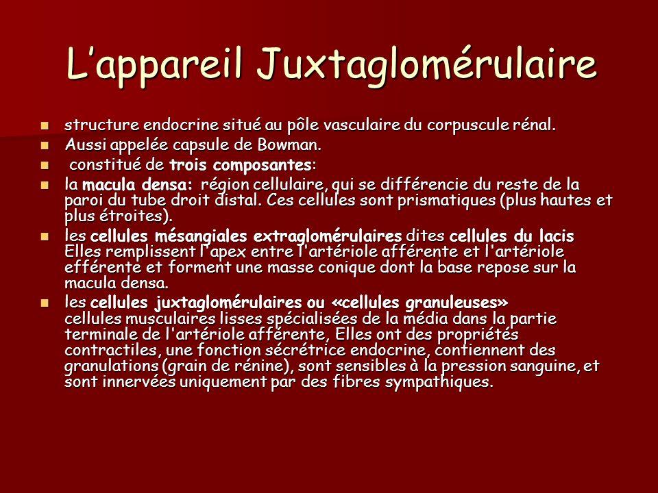L'appareil Juxtaglomérulaire