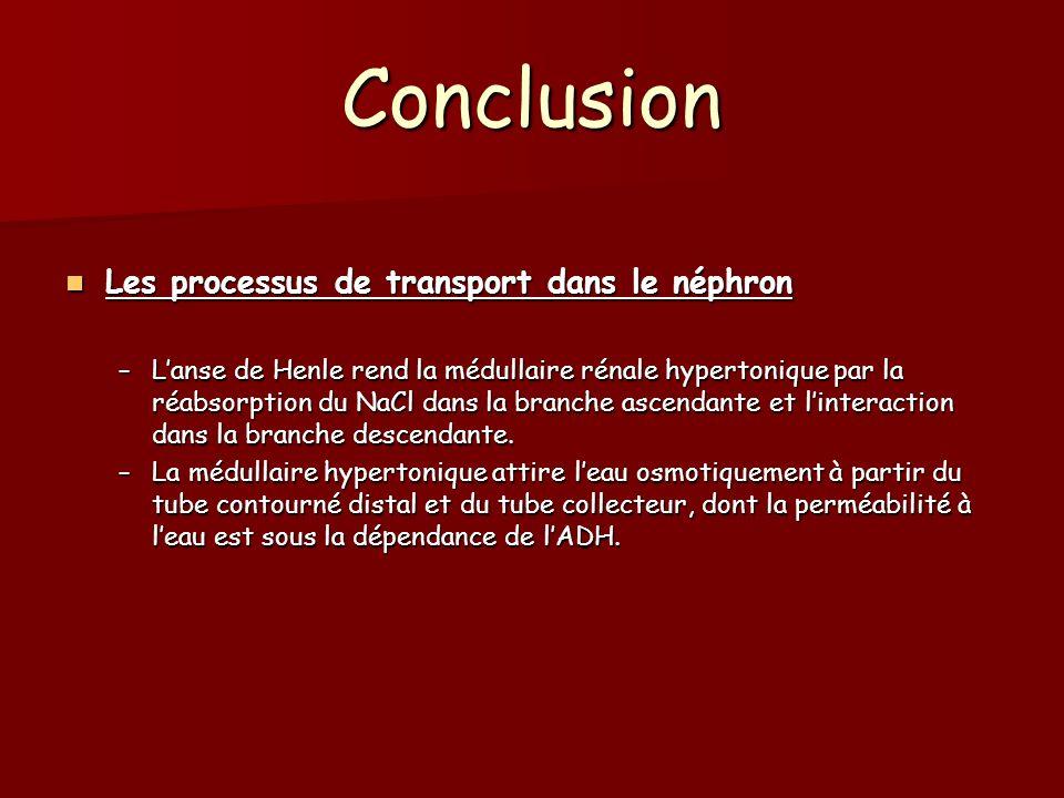 Conclusion Les processus de transport dans le néphron