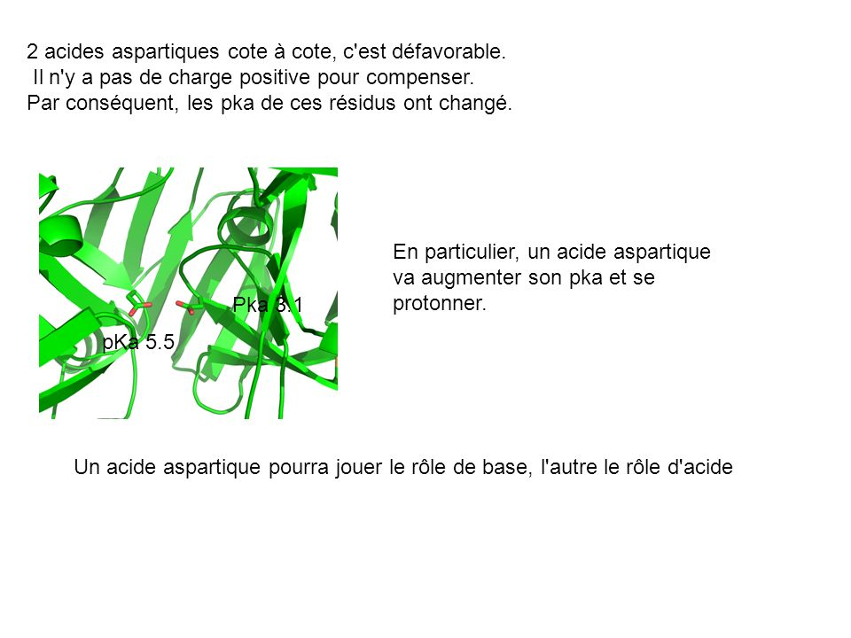 2 acides aspartiques cote à cote, c est défavorable.