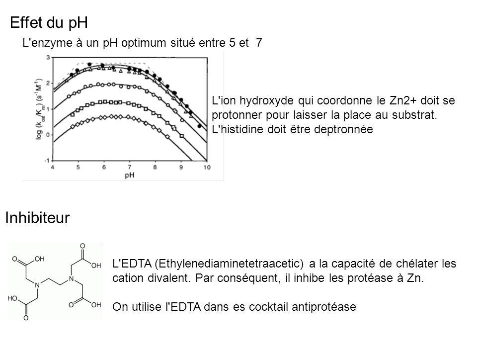 Effet du pH Inhibiteur L enzyme à un pH optimum situé entre 5 et 7