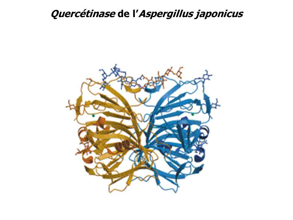 Quercétinase de l'Aspergillus japonicus