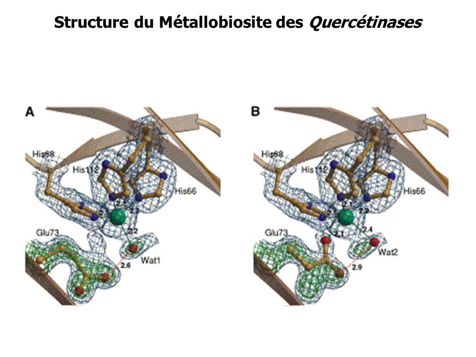 Structure du Métallobiosite des Quercétinases