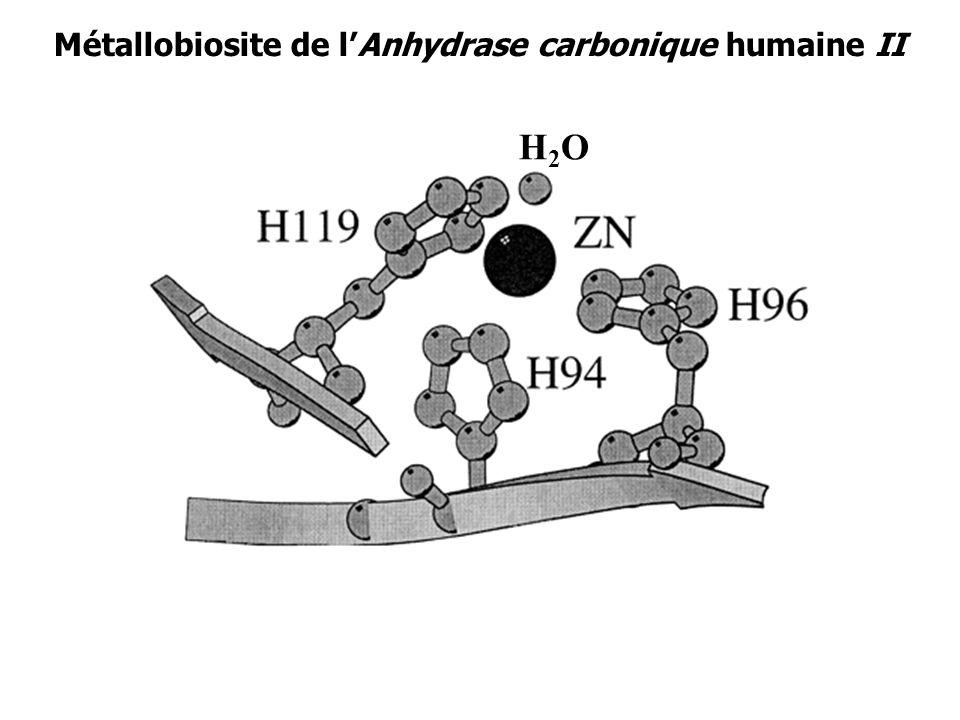 Métallobiosite de l'Anhydrase carbonique humaine II