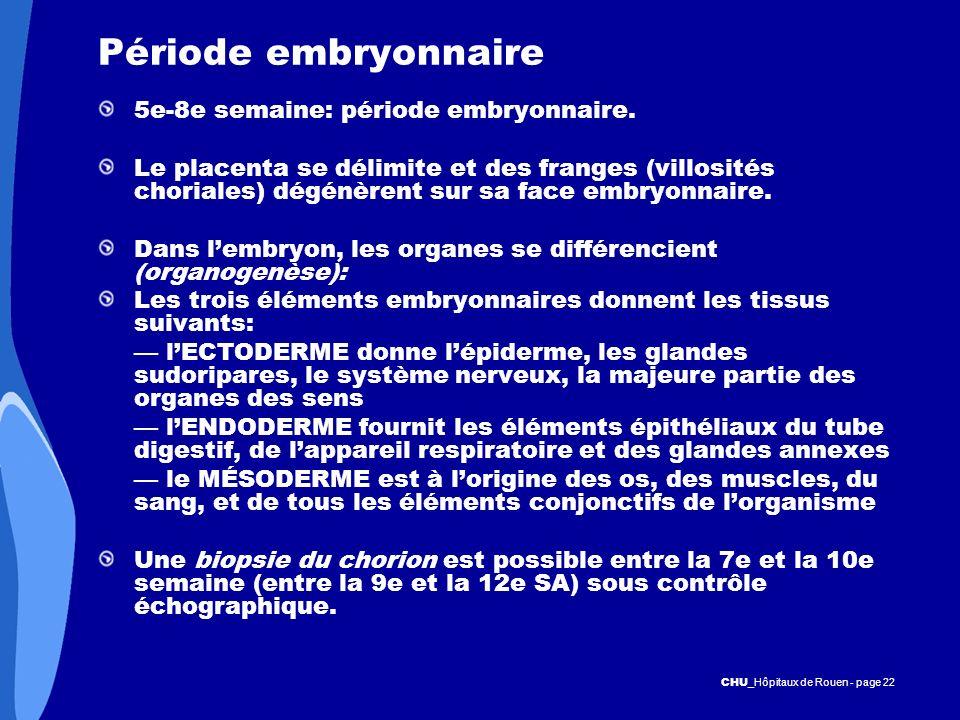 Période embryonnaire 5e-8e semaine: période embryonnaire.