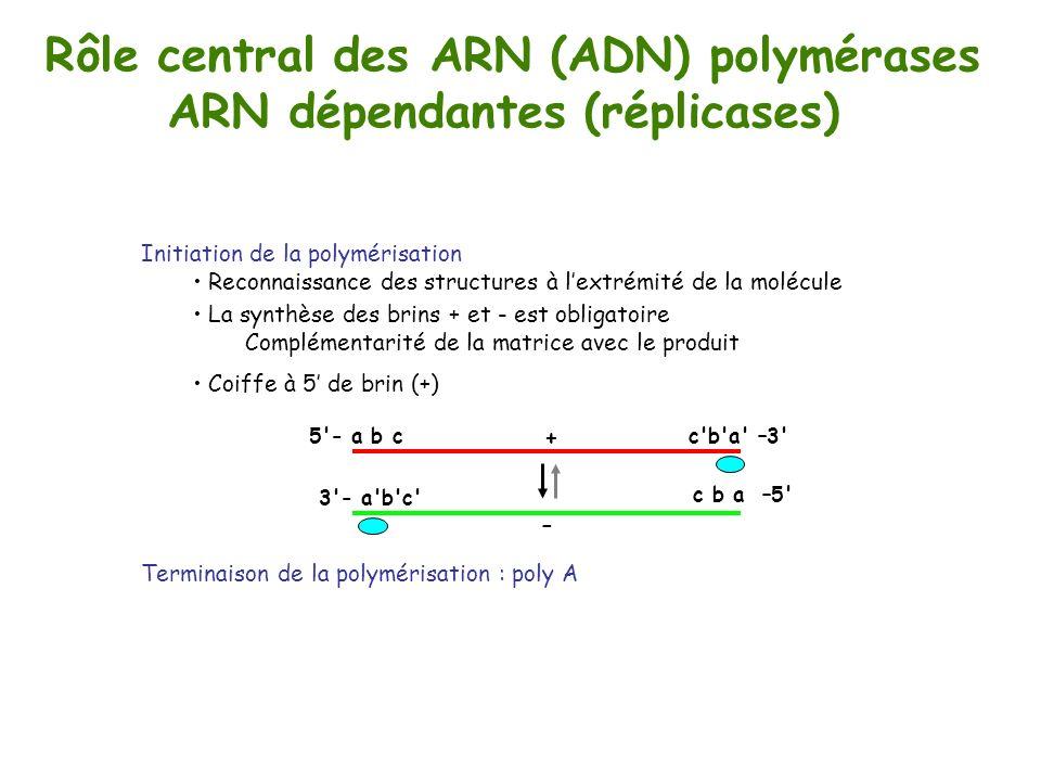 Rôle central des ARN (ADN) polymérases ARN dépendantes (réplicases)