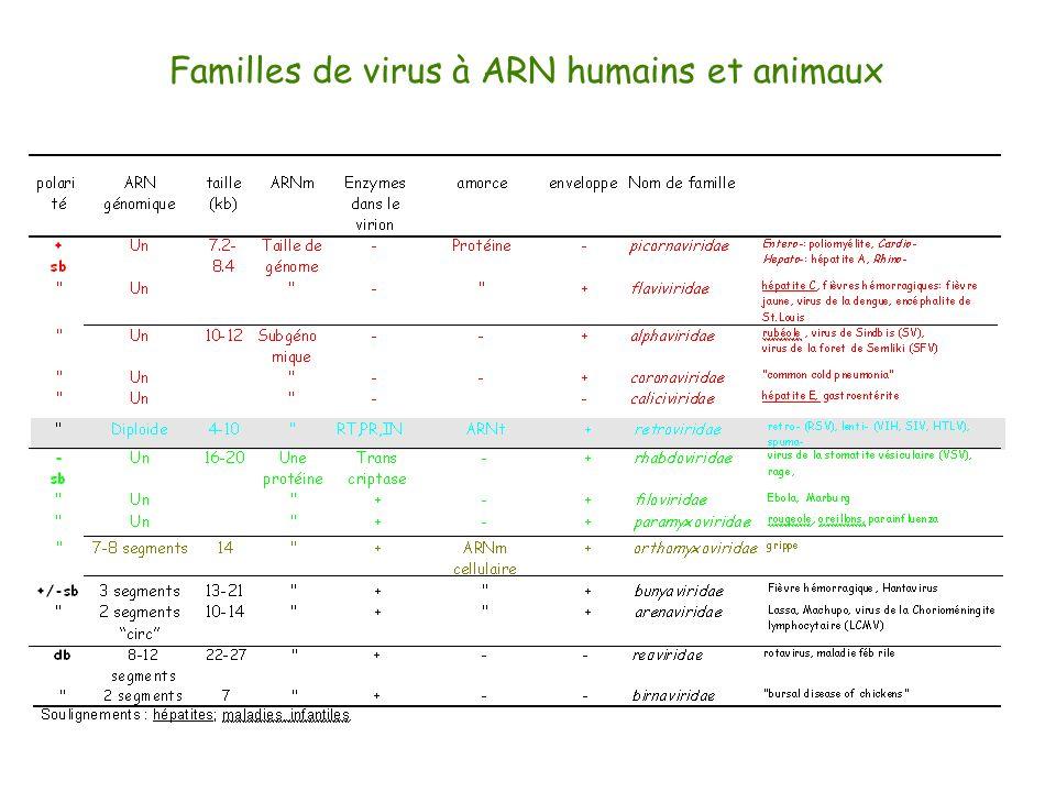 Familles de virus à ARN humains et animaux