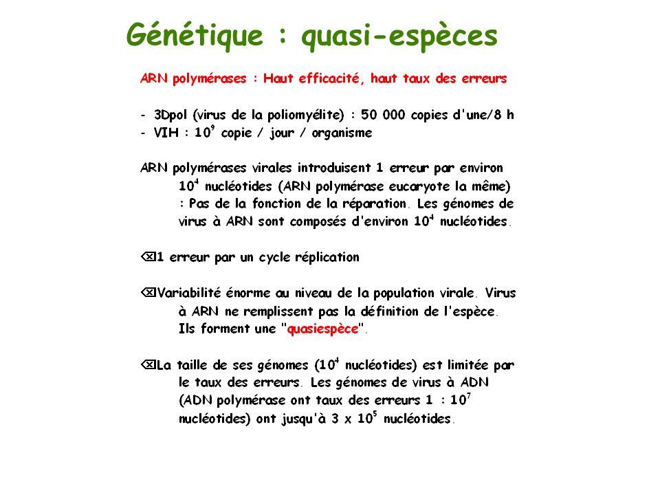 Génétique : quasi-espèces