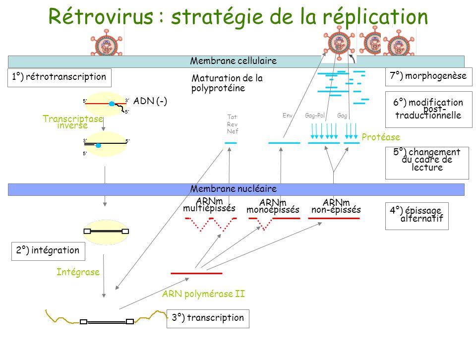 Rétrovirus : stratégie de la réplication
