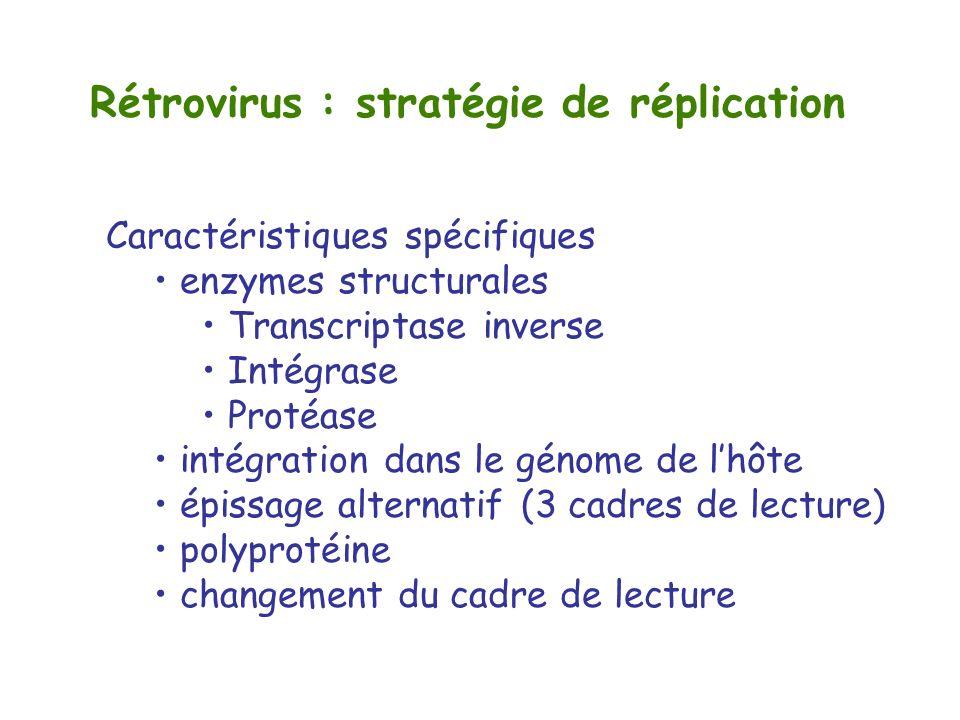 Rétrovirus : stratégie de réplication