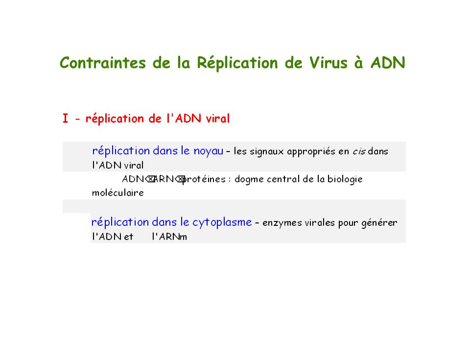 Contraintes de la Réplication de Virus à ADN